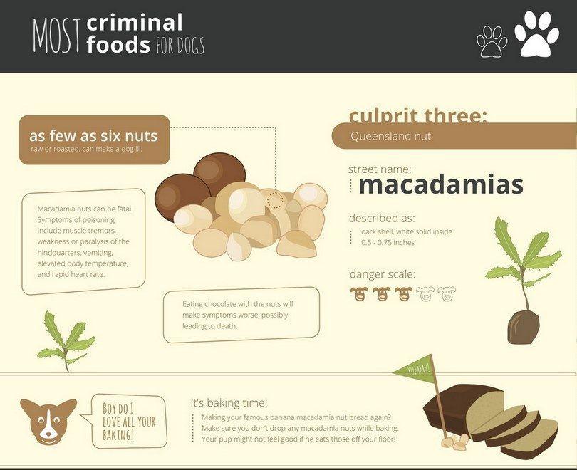 Healthypaws macadamia