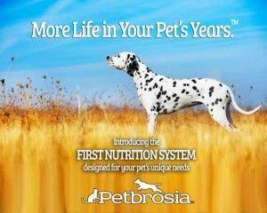 Future Technology Dog que chaque propriétaire d`animal voudra