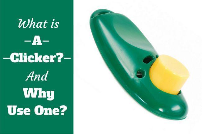 Qu`est-ce qu`un clicker et pourquoi utiliser un écrit à côté d`un clicker vert bg blanc