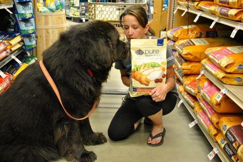 Quel est un bon aliment pour chiens: réglementations et normes pour chien de bonne qualité alimentaire