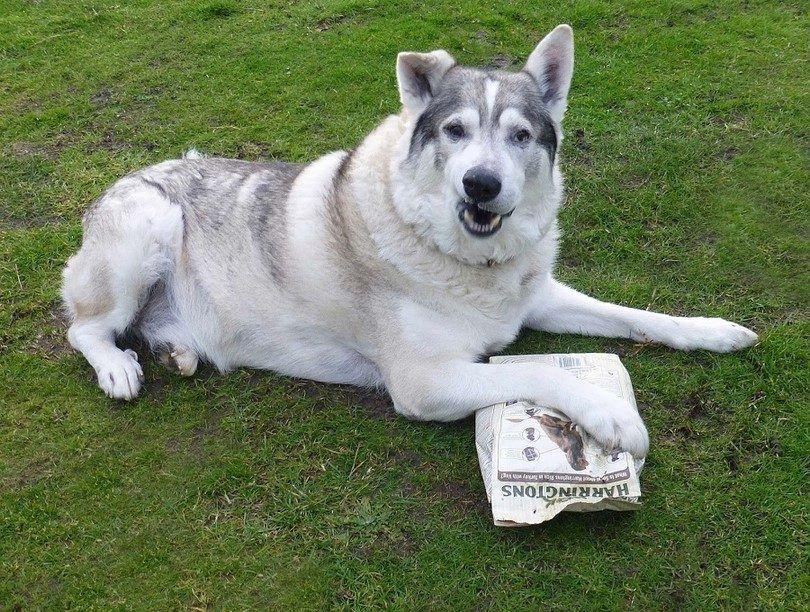 Dog veut la nourriture