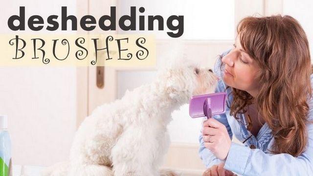 Quelle est la meilleure brosse chien pour un chien de la foule?