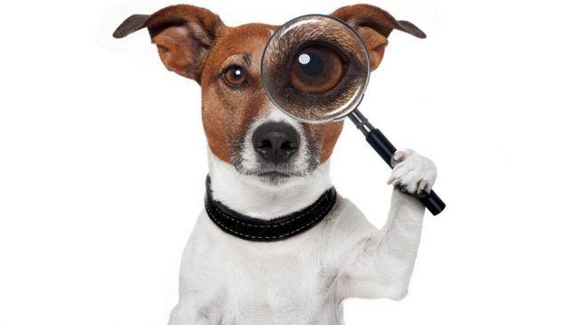 Quel est ce «détective pour animaux de compagnie» faire pour aider les propriétaires de chiens?