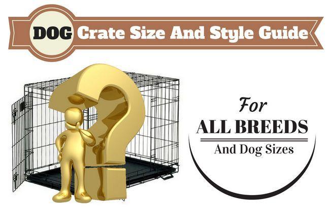 Chien guide des tailles de caisse écrit au-dessus d`un homme d`or et d`interrogation en face de caisse chien