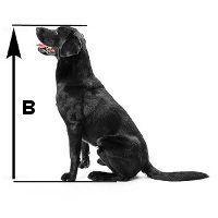 Quelle est la taille de caisse de chien mesurant la hauteur