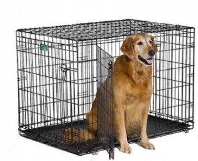 Crate Midwest iCrate Pet avec chien à l`intérieur sur bg blanc