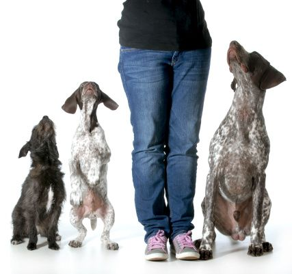 dogtrainer2