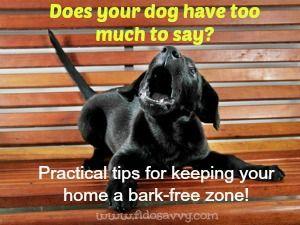 Lorsque les aboiements de chien devient un problème ....