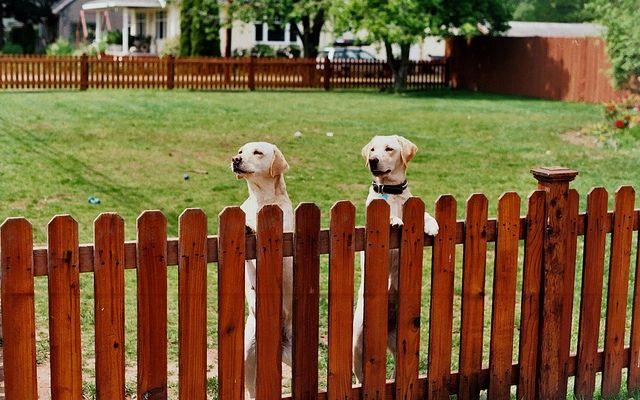 Lorsque Dog Fences sont absolument nécessaires