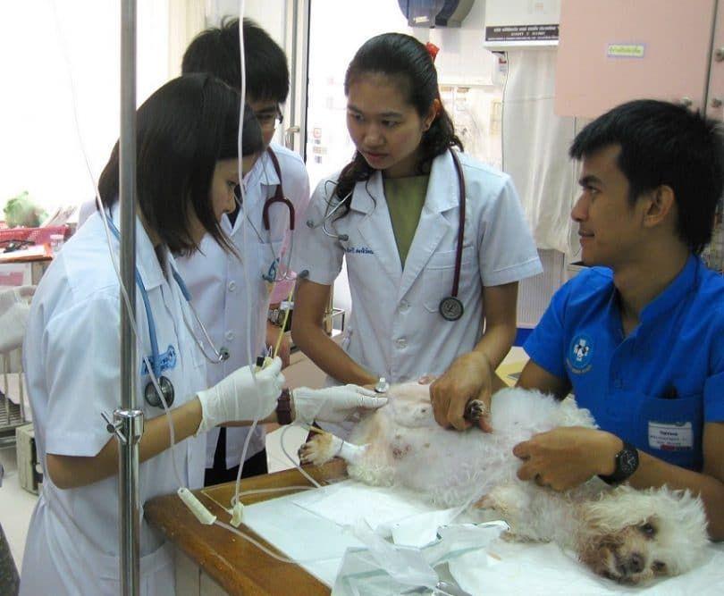 Chien au vétérinaire - l`euthanasie