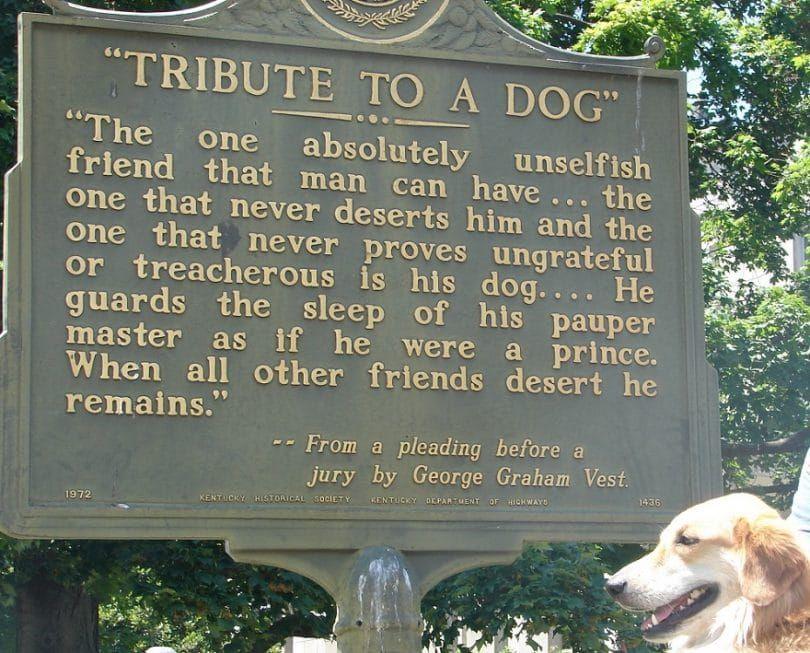 hommage Dog