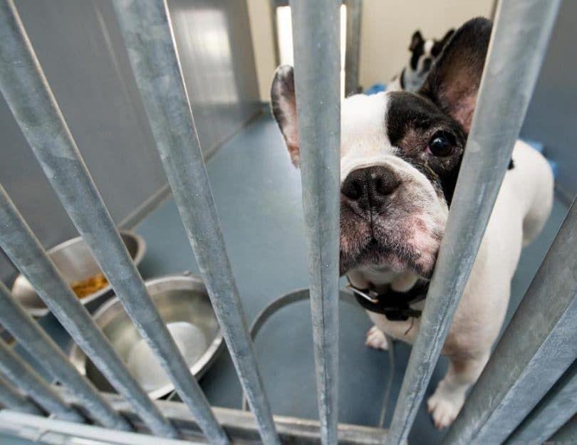 chien Pulvérisé à la clinique