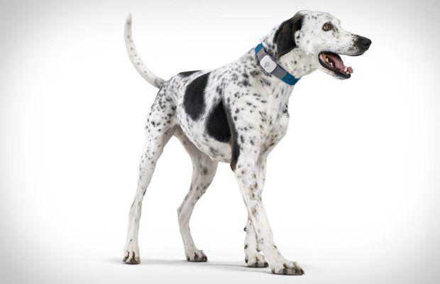 Sifflet a racheté Tagg, les fabricants d`animal de compagnie gps trackers