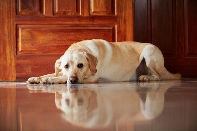 Qui garde le chien dans un divorce?