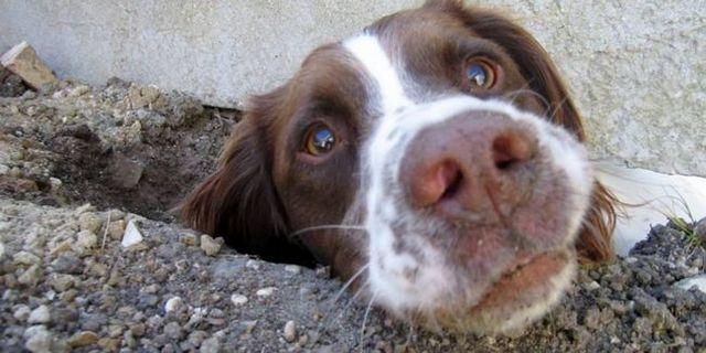 Pourquoi les chiens mangent de la terre? La science derrière l`étrange habitude