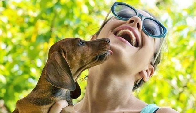 Pourquoi les chiens lèchent? Astuce: il est non seulement parce qu`ils vous aiment