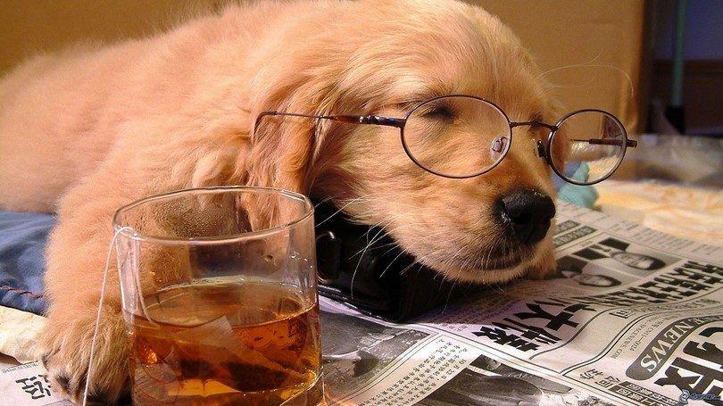 chien avec le thé Sleeping
