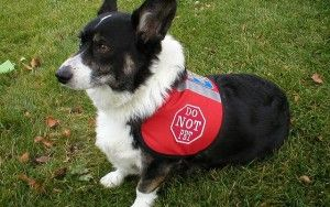 Pourquoi les parents de chiens ont besoin d`investir dans Vestes Dog