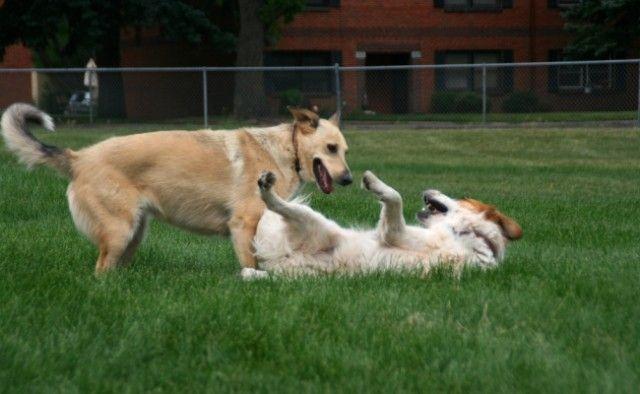 Pourquoi Parcs pour chiens Aren`t Suitable for Every Dog