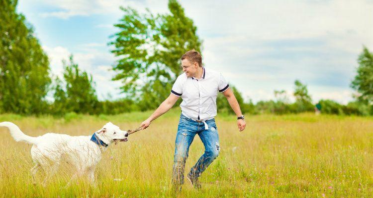 Pourquoi certains chiens détestent les hommes et ce qu`il faut faire à ce sujet