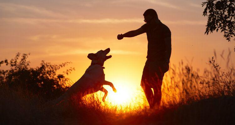 Pourquoi certains chiens Dislike hommes et Que faire à ce sujet