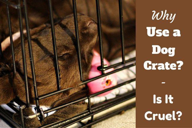 Pourquoi utiliser une caisse de chien - et est-il cruel de caisse un chien?