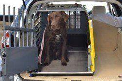 pourquoi utiliser une caisse de chien - un labrador dans une caisse de Voyage voiture, beaucoup plus sûr!