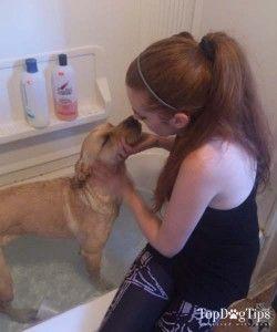 Pourquoi Utilisation shampooing humain sur les chiens est dangereux pour les chiens