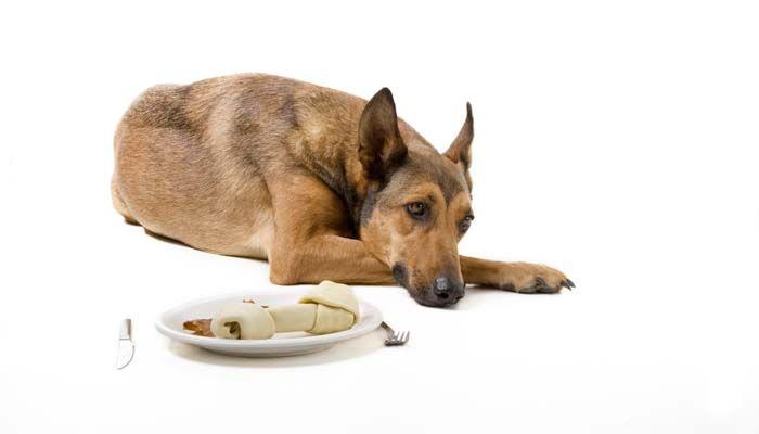 Pourquoi pas mon chien mange? Voici pourquoi les chiens peuvent refuser de la nourriture