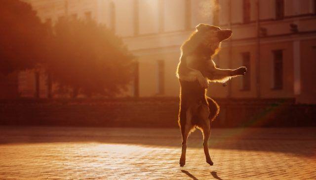 Danseras-tu avec moi? Dis: