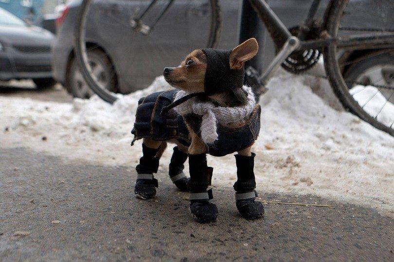 Hiver soins pour les chiens: trucs et astuces pour passer par le froid