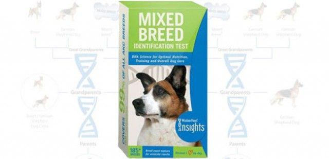 kit de test adn chien Sagesse examen: race mixte de chiens