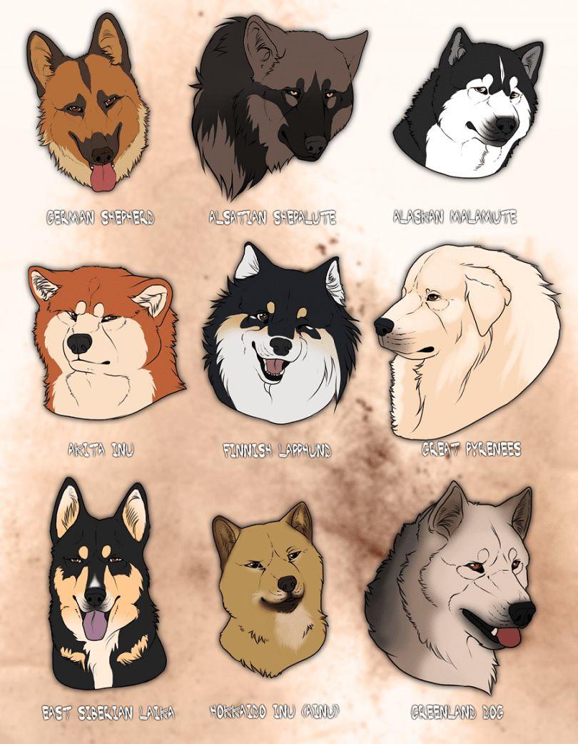 Loup comme races de chiens: la poursuite de l`héritage ancestral de votre chien