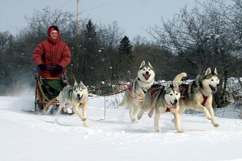 Les chiens de travail: pourvoyeurs d`agilité, de force et d`endurance